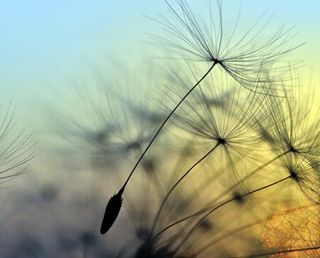 Mindfulness – Jak żyć bardziej uważnie i świadomie