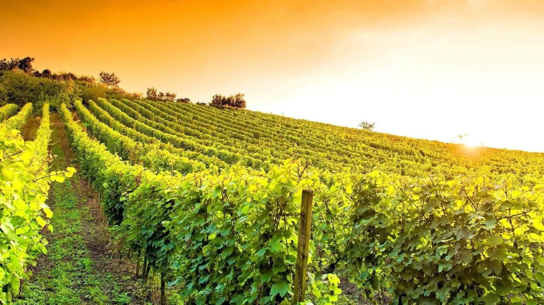 Prezent dla pary - Weekend w winnicy z degustacją wina i kolacją