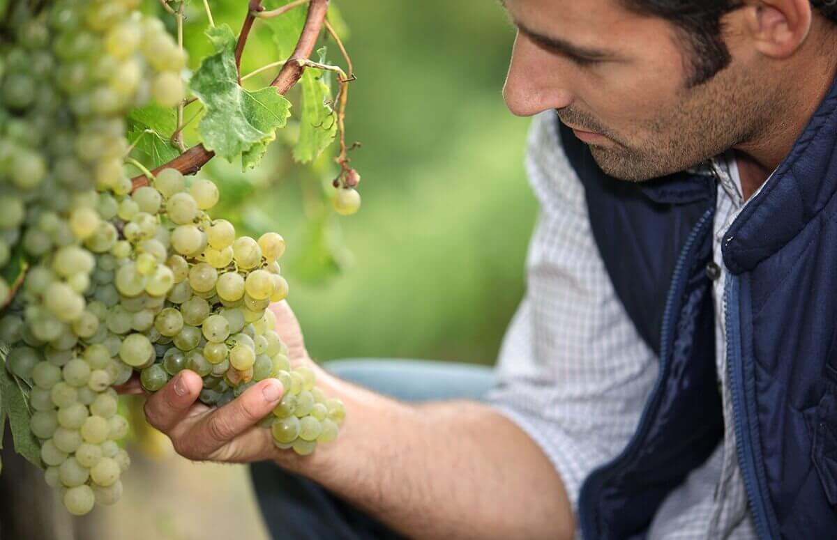 Warsztaty produkcji wina
