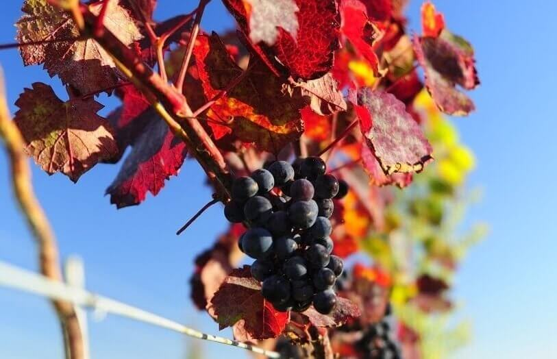 Kolacja dla Dwojga w winnicy i degustacja win pod Wrocławiem