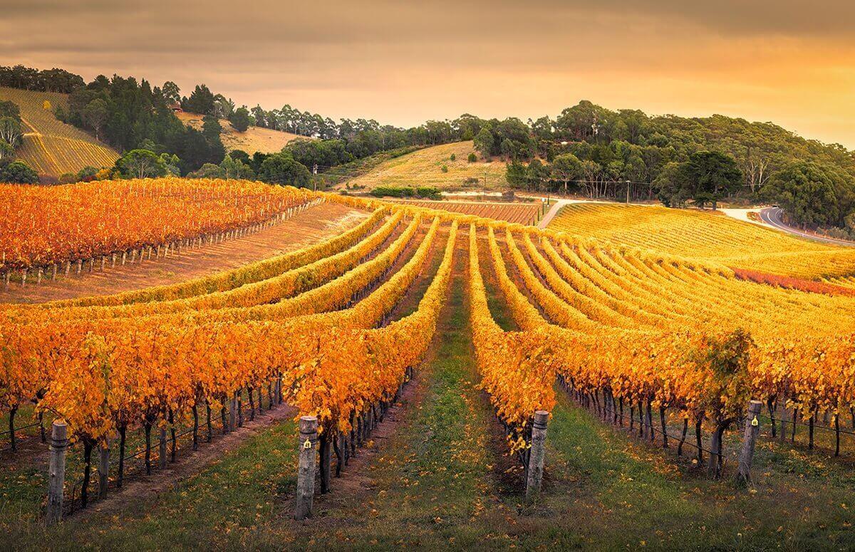 Warsztaty winiarskie w Winnicy Dwórzno na Mazowszu