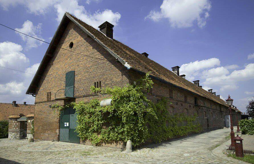 Zwiedzanie winnicy i winiarni z degustacją wina