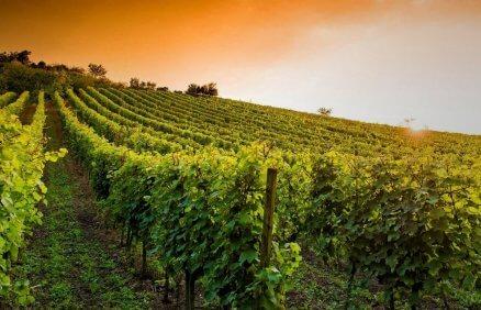 Weekend dla Dwojga z degustacja wina