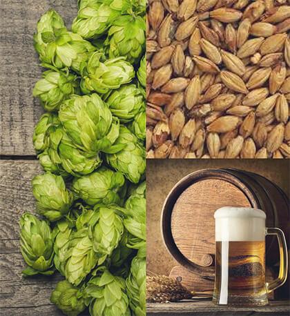 Piwo - proces warzenia - zdjęcia