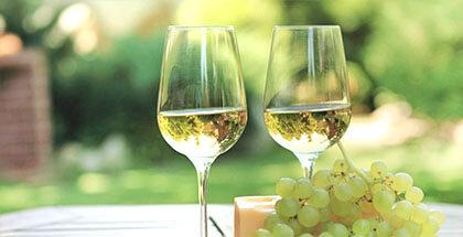 Degustacja wina i sera w winnicy