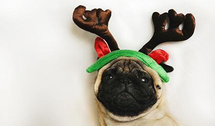 Zwierze w prezencie świątecznym